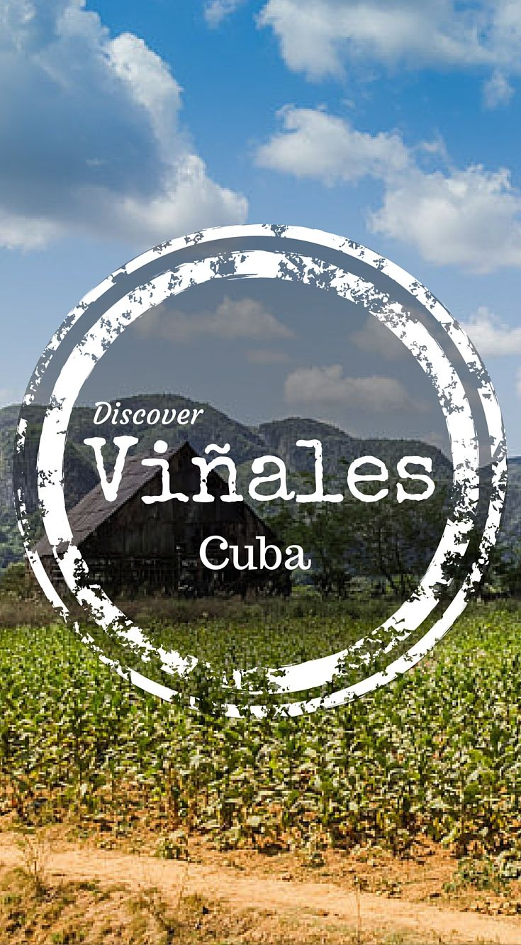 Discover Vinales Cuba. Horseback Riding in Viñales Valley. Picture a scene from an old western film, where the wary cowboy rolls up into a tiny town and the only thing you see rolling down the streets are tumbleweeds. Now replace those tumbleweeds with classic cars and sun kissed Cuban cowboys and you will have found yourself standing in Viñales. Click to read the full travel blog post http://www.divergenttravelers.com/horseback-riding-vinales-valley-cuba/