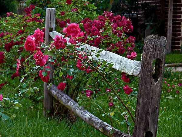 17 Best Images About Just Twigs Trellis Fence Arbor