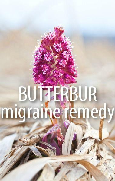 Butterbur Petasines | Migraine, Tension Headache, Spasms ...