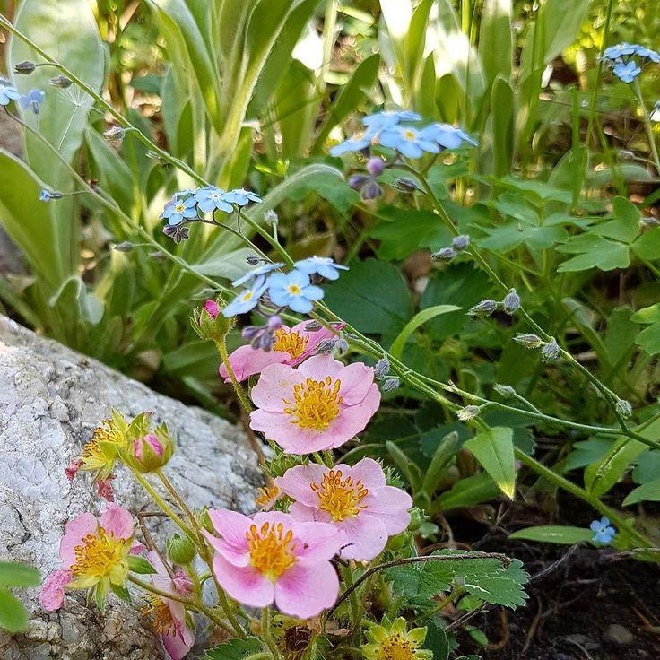 Jag älskar att gå omkring i trädgård och natur och upptäcka de fina miniatyrlandskap som ibland döljer sig nära marken eller kanske bakom en gren.