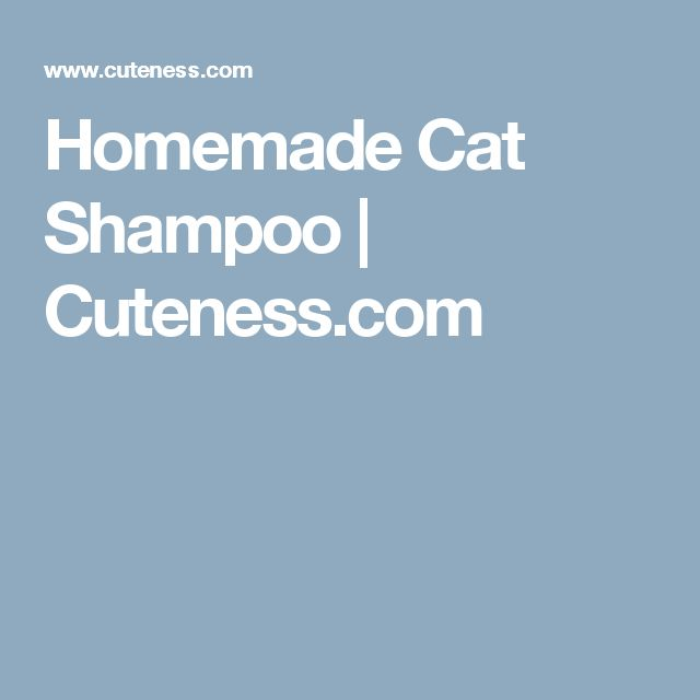 Homemade Cat Shampoo | Cuteness.com