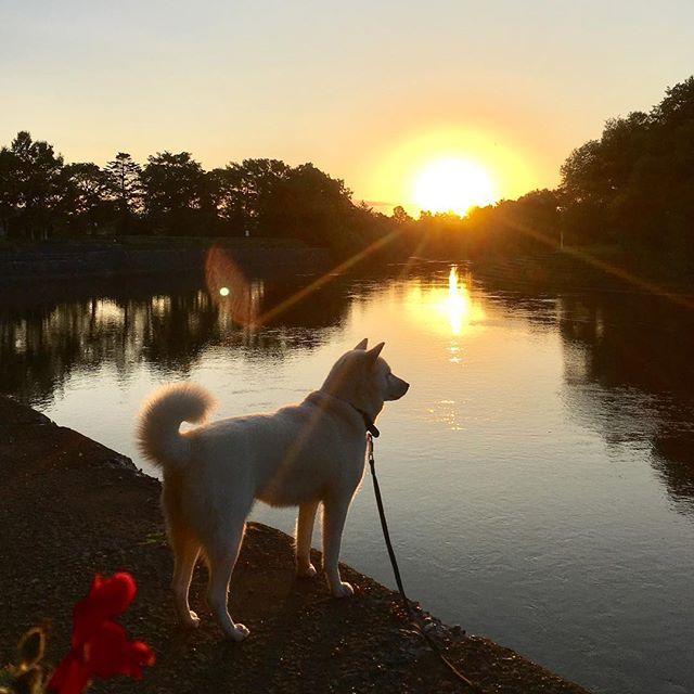おはよん〜(^ェ^)〜 ステキな朝ょ〜(^^) だけど明日から台風の影響でお天気は⤵︎⤵︎⤵︎ アキサミョ〜(-_-) たくさんお散歩しょ〜と^ ^ #北海道犬 #日本犬 #アイヌ犬 #犬 #白犬 #わんこ #愛犬 #笑顔 #犬バカ部 #和犬 #天然記念物 #犬散歩 #涼しい #初秋 #アウトドア #保護犬シェルター #殺処分ゼロ #お散歩好き #hokkaidoken #hokkaidoinu #Japaneseken #Japanesedog #ainuken #ainudog #Whiteinu #Likes #outdoor