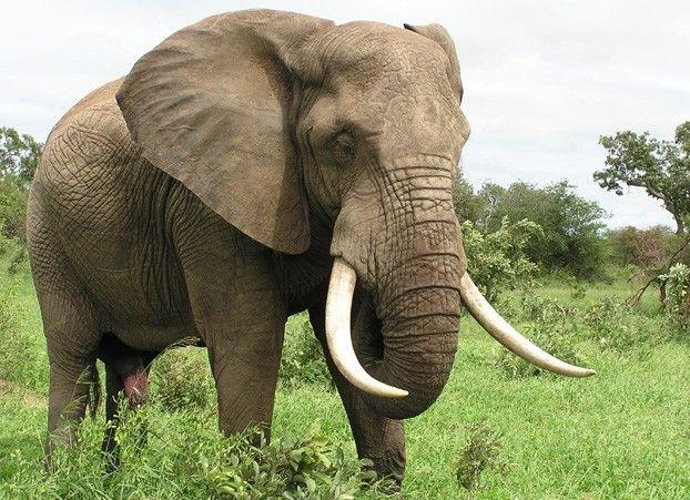 African Elephants Habitat - wallpaper.