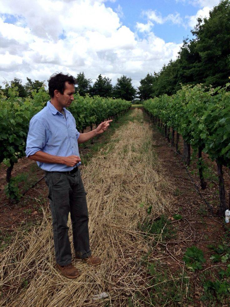 Philip Myburgh De Meye Wines