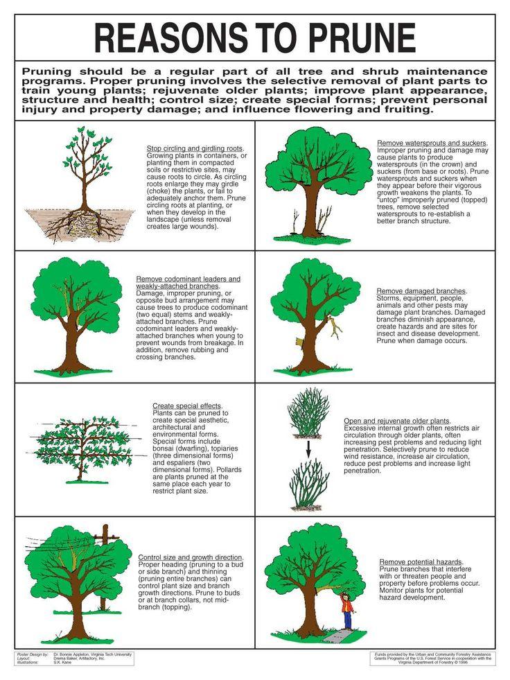 Reasons to Prune