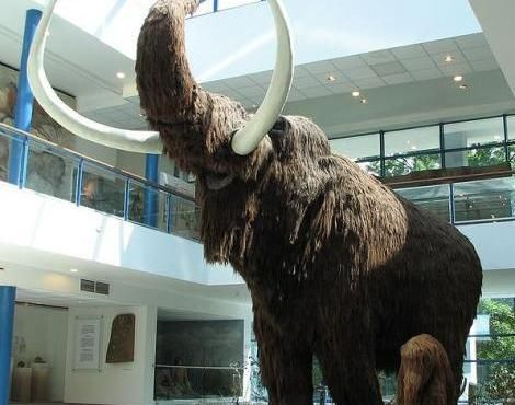 A lifesize model of a Woolly Mammoth in the Brno museum Anthropos.