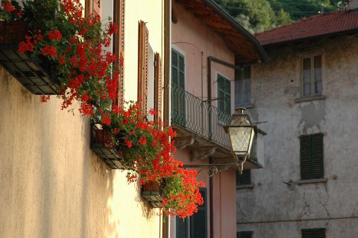 Geraniums in baskets down at the Port at Sala Comacina, Lake Como