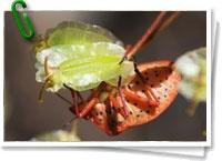 Los insectos son el grupo de seres vivos con mayor abundancia de nuestro planeta, hay casi un millón de especies descritas (más varios millones posiblemente por descubrir) por lo que hay más que si juntamos el resto de animales de todos los grupos juntos, que se dice pronto. A poco que observes, aun con su pequeño tamaño, estamos rodeados por una gran variedad y cantidad de ellos. + info: www.barrameda.com.ar/dp/