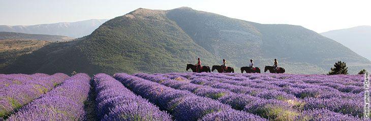 équitation en Baronnies Provençales