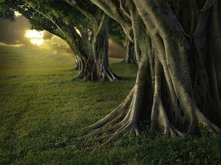 Paisajes de Ensueño: Paisajes de bosques
