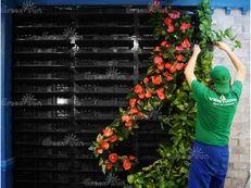 фитостена, живые стены, озеленение стен, вертикальное озеленение, вертикальные сады, фитомодули, фитостены Green Sky