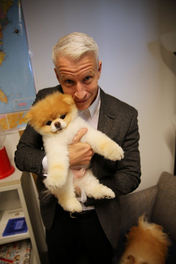 Anderson Cooper - Boo The Dog Is One Of The Most Famous -4769