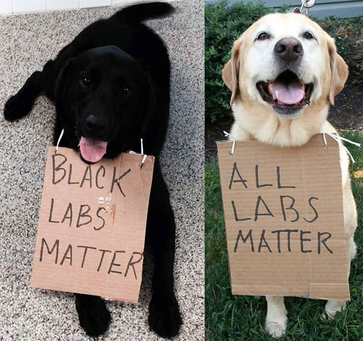 Black Labs Matter . . . All Labs Matter!!!   Satire!