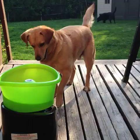 Dieser Doggo braucht niemanden, der seinen Ball wirft 😍   – Tiere