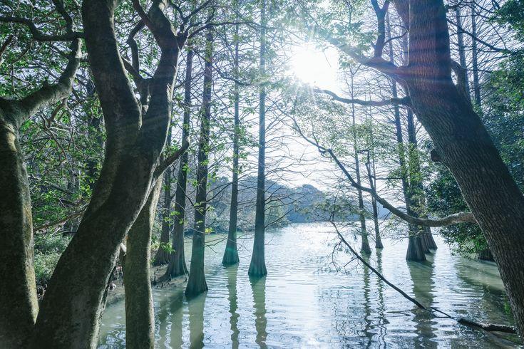 「幻想的な篠栗九大の森幻想的な篠栗九大の森」のフリー写真素材を拡大