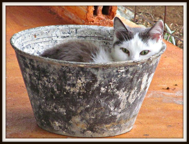 My cat Cloudy in a bucket :)