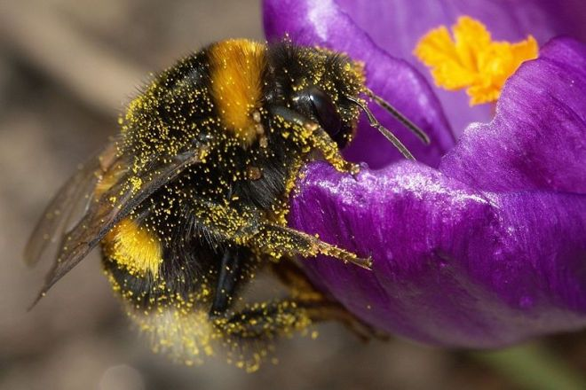 Flowers are electric billboards! Bumblebees can sense the electric fields of flowers, and detect recently visited ones.
