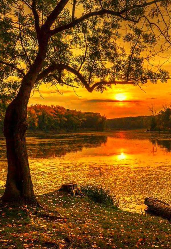 Fall Scenery Wallpaper Ned The Toothpick On In 2019 Nature Beautiful Sunset