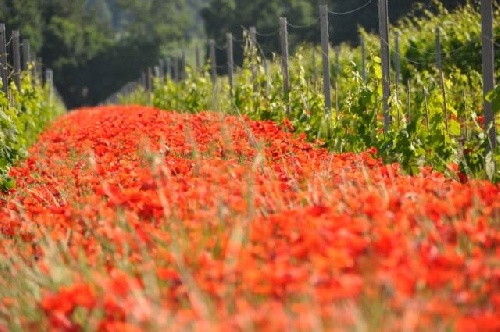Domaine Pinchinat, Provence, Organic ... of course ... and just beautiful!