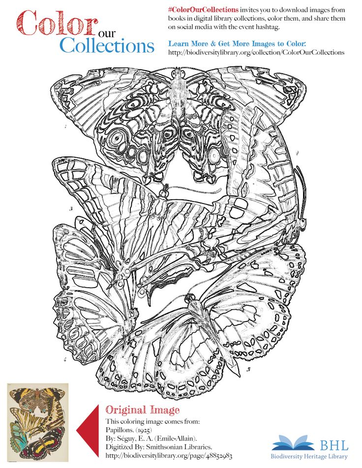 """#ColorOurCollections. Original Image: http://biodiversitylibrary.org/page/48852983. To download this image, right click on the pin and choose """"save image as"""" to save the image to your computer. You can then print and color at your leisure!"""