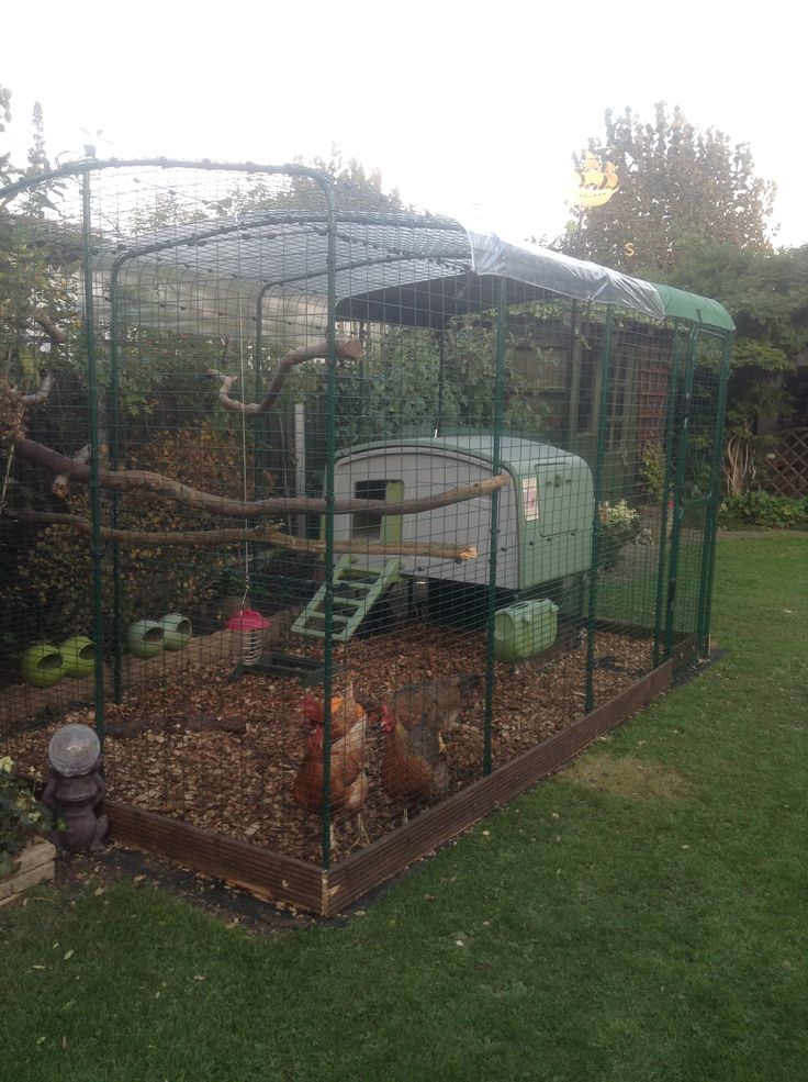 M s de 25 ideas incre bles sobre chicken enclosure en for Chicken enclosure ideas