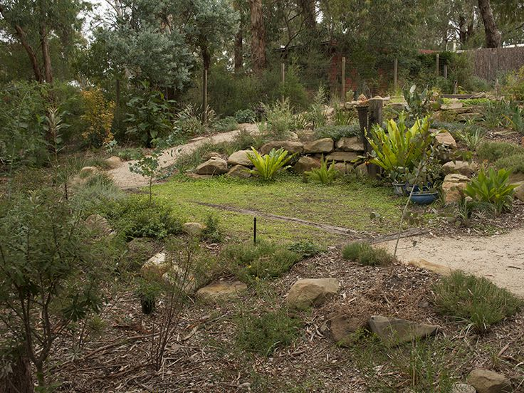 Dichondra lawn at the bottom of the garden, below the billabong.