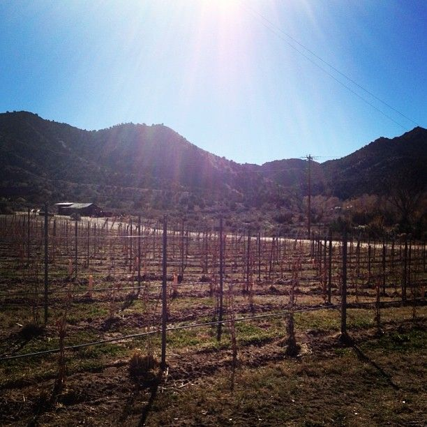 Visit Vivac's adobe tasting room, built by the owners themselves, and vineyard set along the road to Taos featuring award-winning wines.