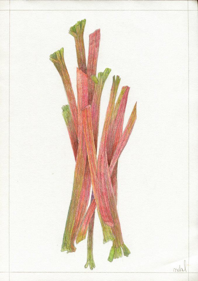 """Rhubarb"", for KUCHNIA magazine, by AROBAL, 2014"