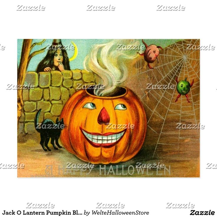 Jack O Lantern Pumpkin Black Cat Spider Web Postcard