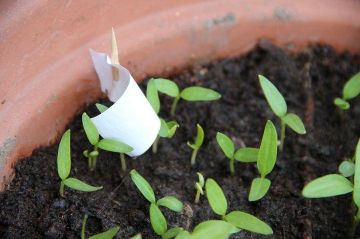 Magvetés a kertben: hogyan és mikor fogjunk hozzá? | Hobbikert.hu