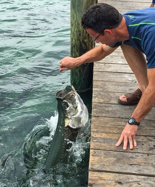 Feeding tarpon at Robbie's Marina in Islamorada, Florida is one of Five Funky Things To Do in the Florida Keys. Be sure to add this fun experience to your travel list.