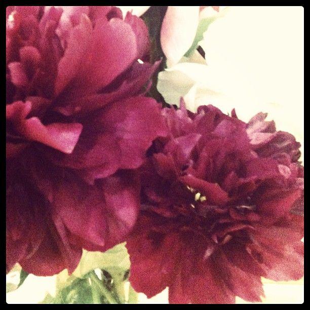 Pianese flower   -Mal Howard 2013