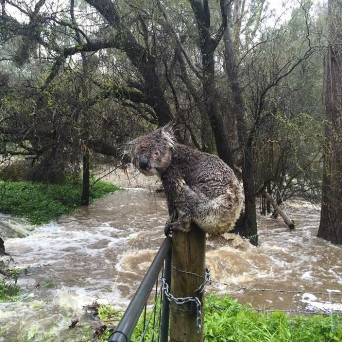 Flood warnings remain in place for the Angas, Bremer, Gawler and Onkaparinga…