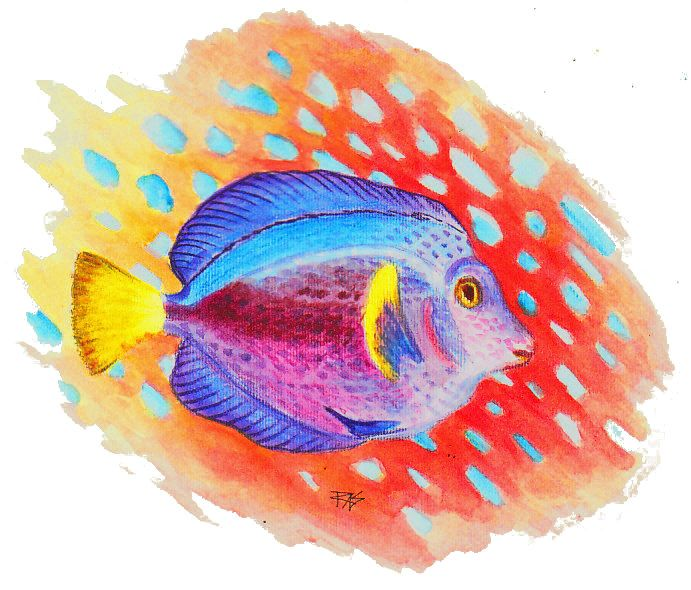 17 Best images about Tropical Fish on Pinterest ...