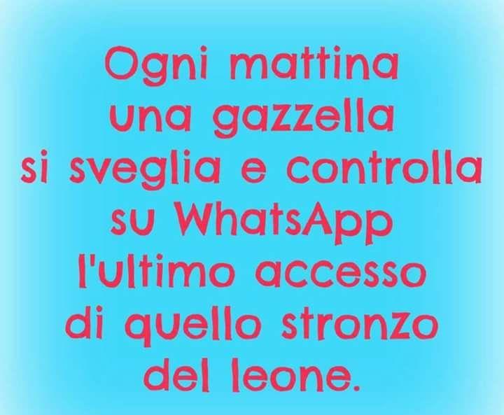 leone gazzella whatsapp