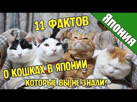 11 Фактов о Кошках в Японии | Социальная сеть котов и кошек