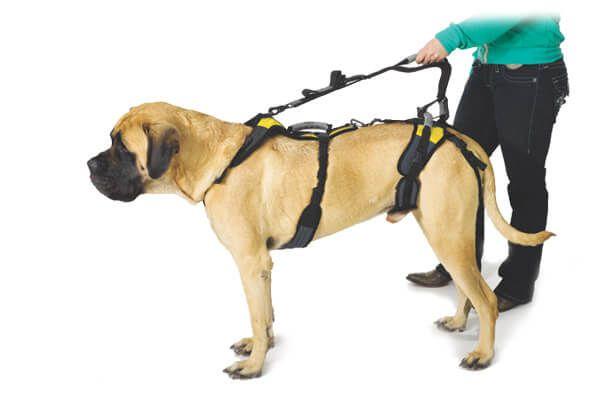 Help Em Up Dog Harness Hip Dysplasia Dog Carrier Dogs Dog