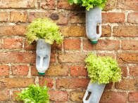 Old milk and juice jugs can be used to start seeds, and even create a mini-greenhouse by cutting into the jug to fashion a vessel with a hinged lid. Here, mixed greens  are planted in recycled containers attached to the wall for a cool vertical salad garden. Would rather grow pot this way instead!