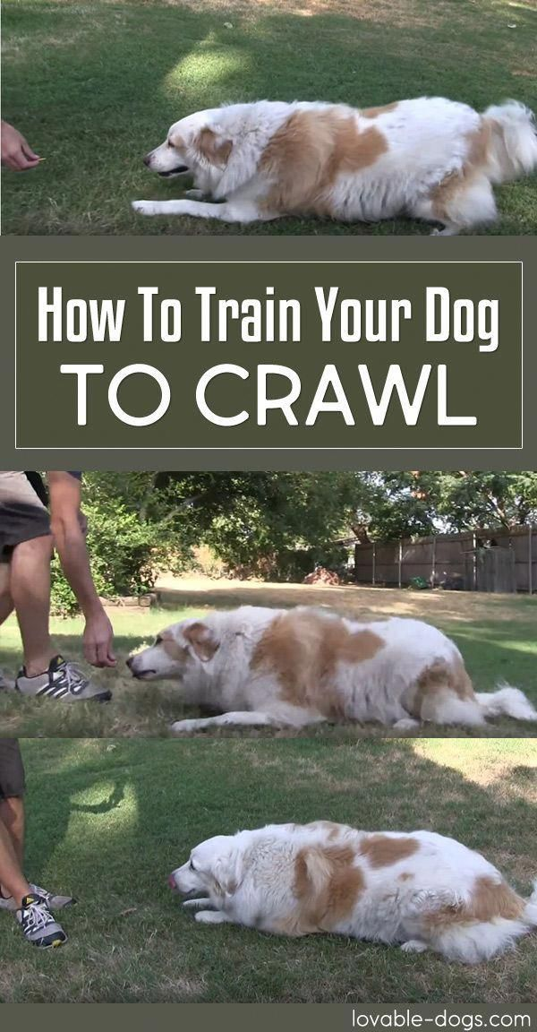 Excellent Reversed Puppy Training See The Crazy Video Training Your Dog Dog Training Obedience Puppy Training