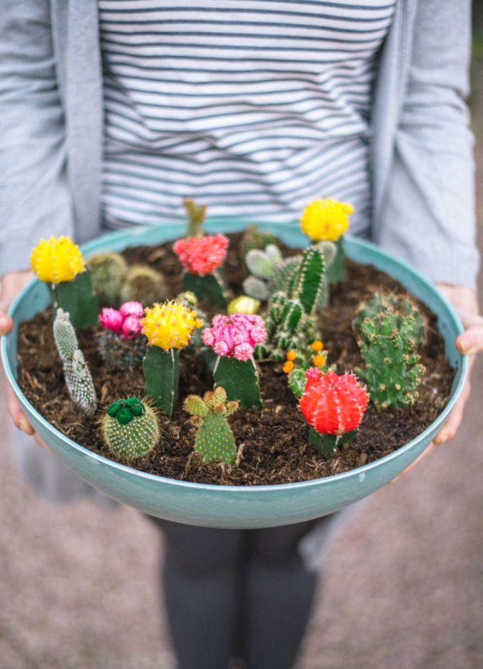 zo maak je een vetplantjes en cactussen tuin-3