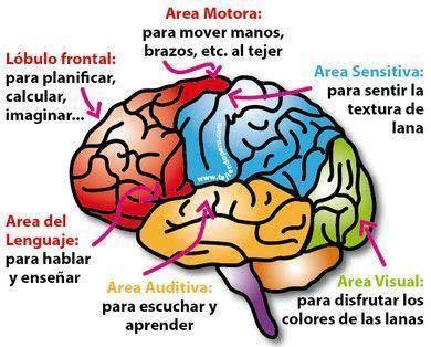 Tejer estimula el cerebro