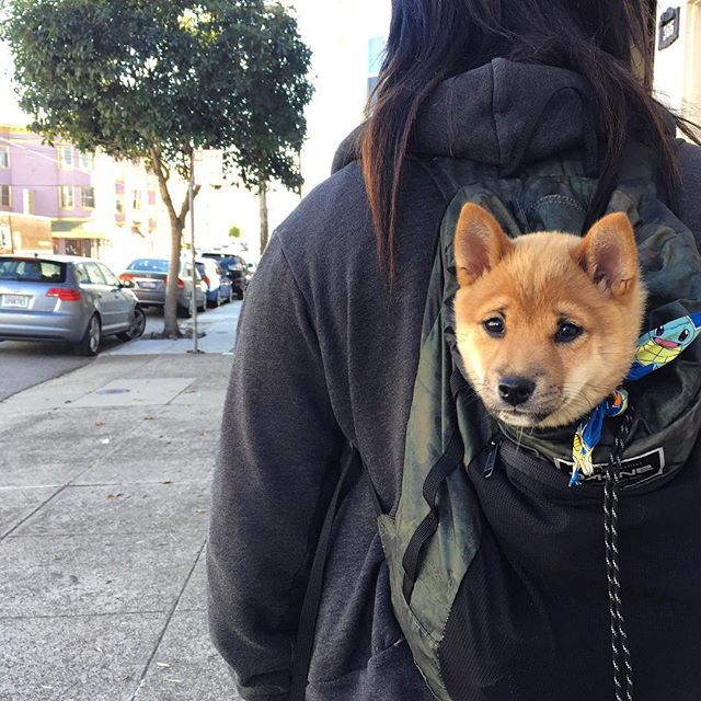 Yes ! a backpack and a puppy