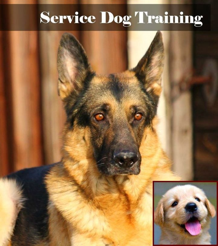 Dog Behavior When Your Pregnant And Dog Training Classes