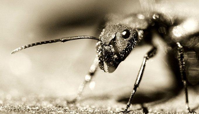 Ants: swarm intelligence - creation.com