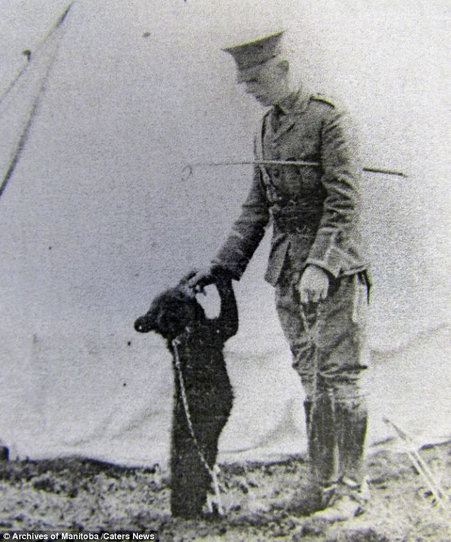 "Lieut. Harry Colebourn playing the black bear cub ""Winnie"", who was bought in White River (Ontario) while on his way to the training camps in Valcartier (Quebec) in 1914. Colebourn was a veterinarian - an essential position in a war in which horses were still a primary mode of transportation. Salisbury Plains, England, 1914"