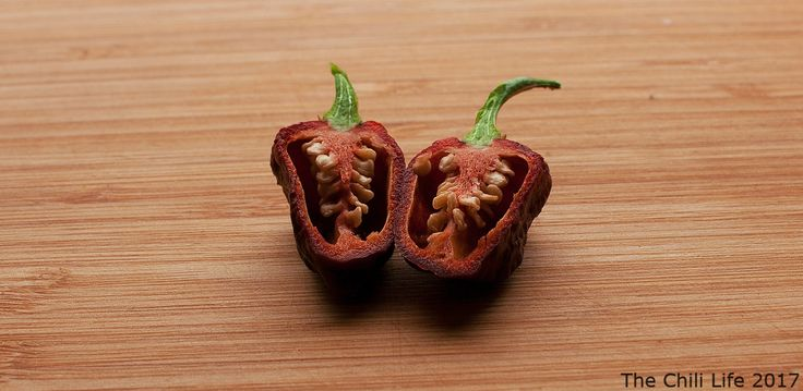 https://flic.kr/p/CLC21m | Apocalypse Scorpion Chocolate Cut in Halves | Apocalypse scorpion chili peppers cut in halves. This variety is of the capsicum chinense variety and is a very hot pepper. This pepper is the last of the growing season 2017 and I cut them in halves, sliced them up and store them now in the freezer.   Feel free to use my photos but don't forget to attribute the photo to the Chili Life (www.thechili.life.)
