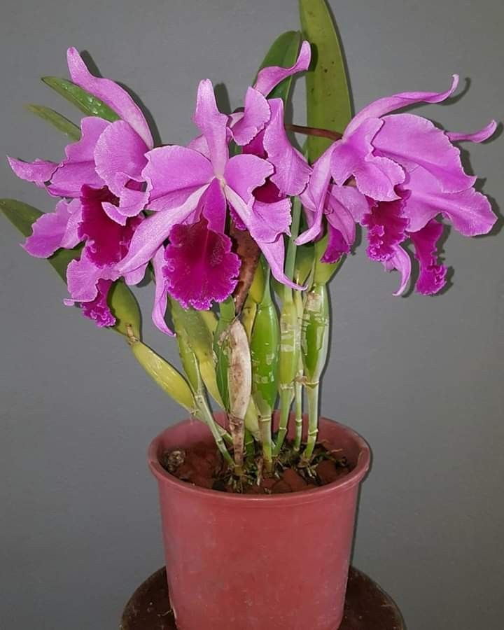 Pin By Norma Heredia On Mi Locura Pinterest Orchids Orchid Care