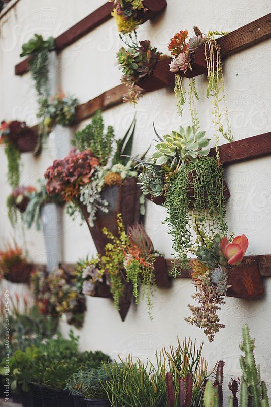 Succulent Wall Garden by Nicholas Roberts YES | See more about succulent wall gardens, succulent wall and wall gardens.