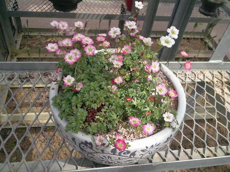 아름다운 들꽃