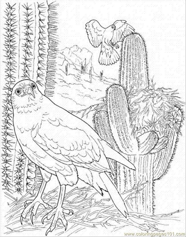 12 Pics Of Desert Bird Coloring Page Arizona Desert Animals